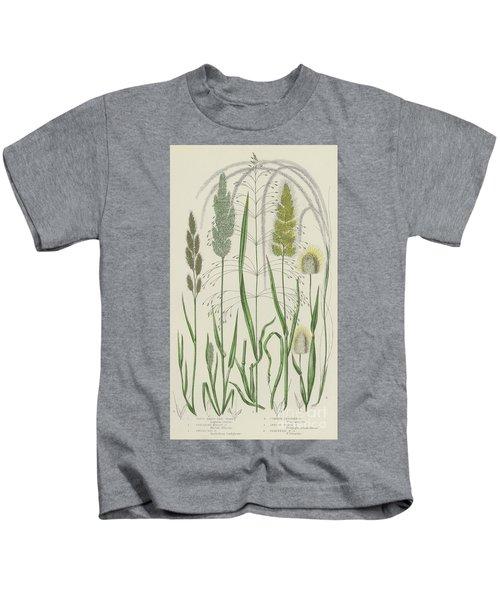 Vintage Botanical Print Of Grass Varieties Kids T-Shirt
