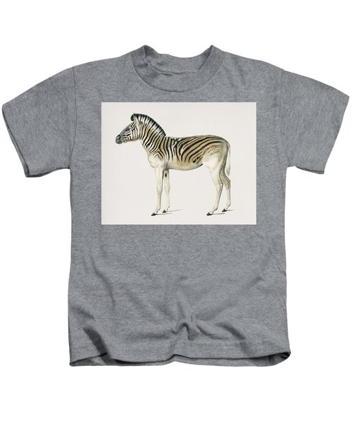 Mountain Zebra  Dauw  Illustrated By Charles Dessalines D' Orbigny  1806-1876  Kids T-Shirt
