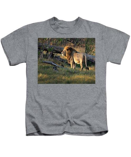 Male Lion In Botswana Kids T-Shirt