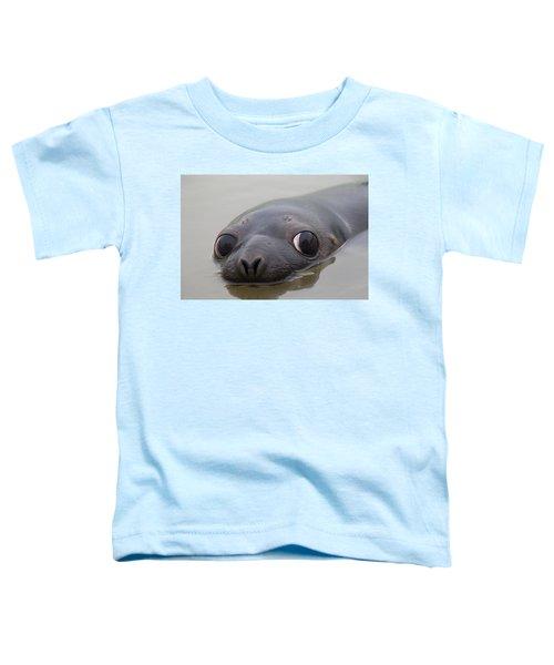 110714p127 Toddler T-Shirt