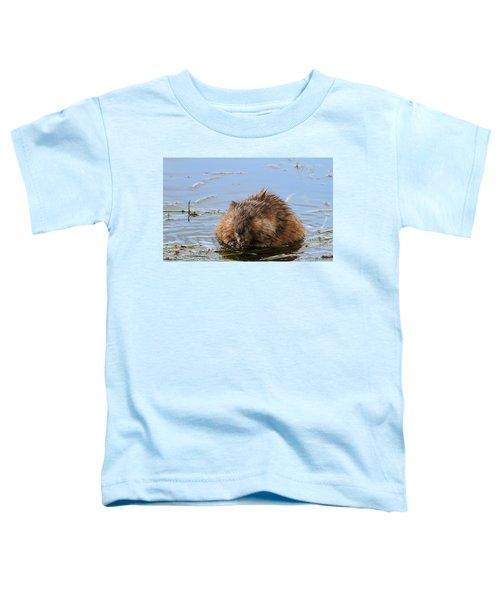 Beaver Portrait Toddler T-Shirt by Dan Sproul