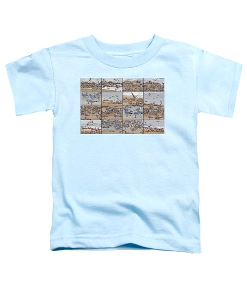 Birds Of Many Feathers Toddler T-Shirt by Betsy Knapp
