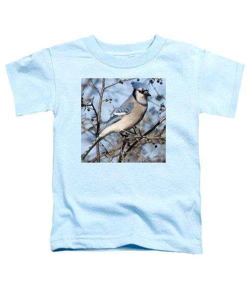 Blue Jay.. Toddler T-Shirt