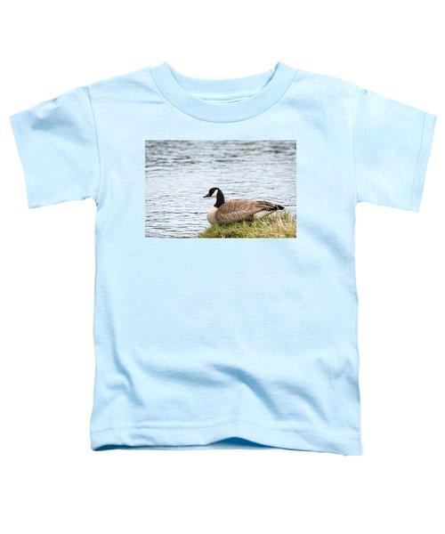 Canada Goose Toddler T-Shirt
