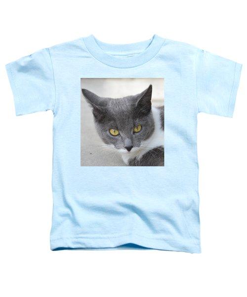 Gray Cat - Listening Toddler T-Shirt