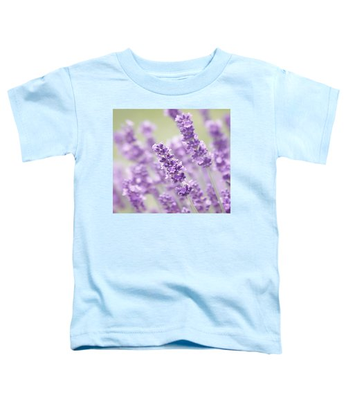 Lavender Dreams Toddler T-Shirt