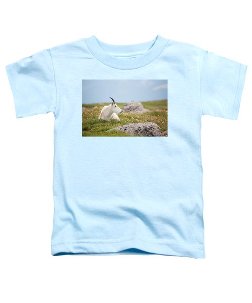 Lie Down In Green Pastures Toddler T-Shirt