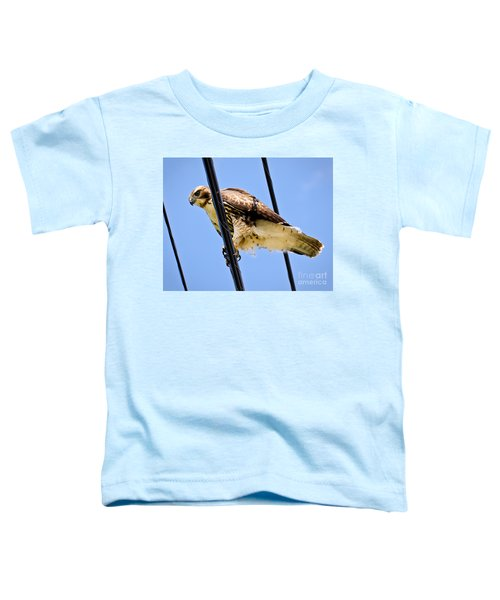 Redtailed Hawk Toddler T-Shirt