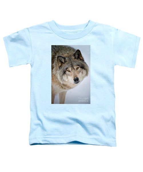 Timber Wolf Pictures 255 Toddler T-Shirt