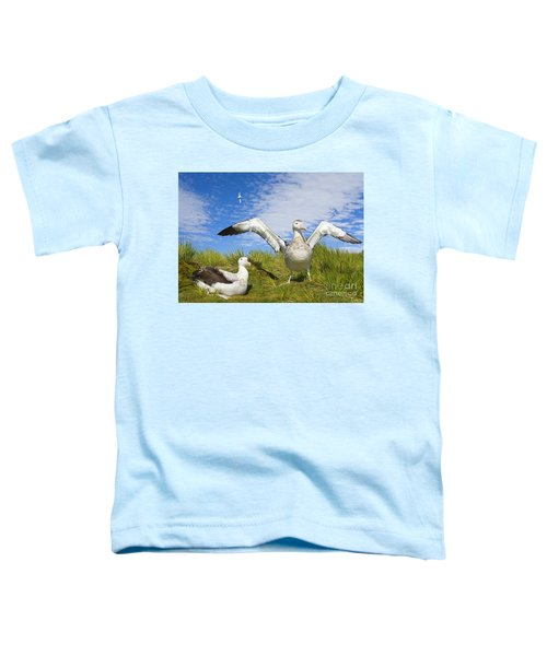 Wandering Albatross Courting  Toddler T-Shirt by Yva Momatiuk John Eastcott