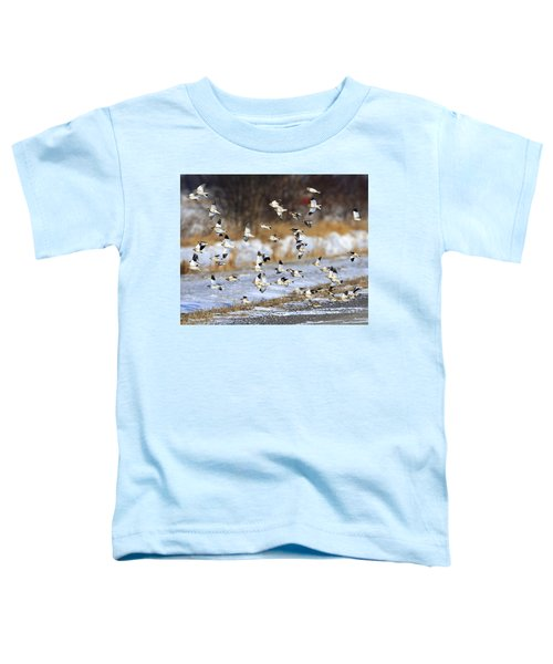 Snow Buntings Toddler T-Shirt by Tony Beck