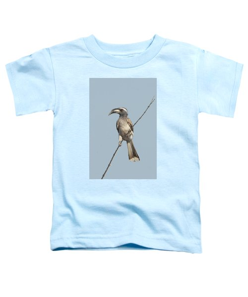 African Grey Hornbill Tockus Nasutus Toddler T-Shirt by Panoramic Images