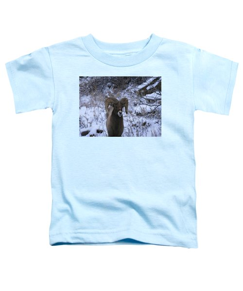 Bighorn5 Toddler T-Shirt
