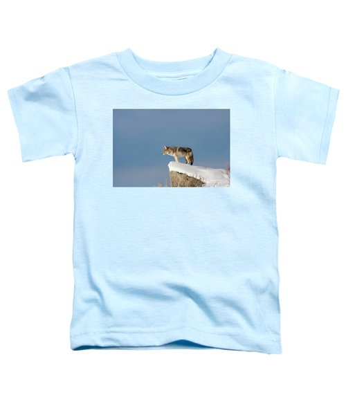 Coyote At Overlook Toddler T-Shirt