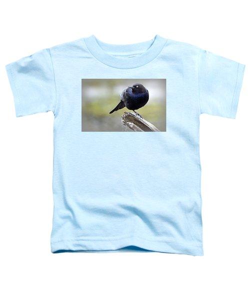 Grackle Resting Toddler T-Shirt
