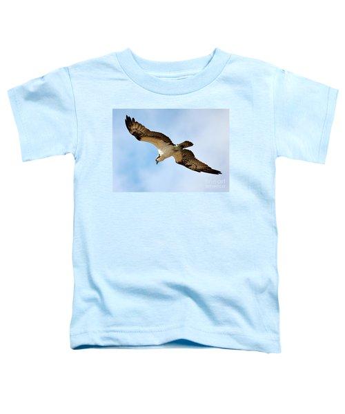 Hunter Osprey Toddler T-Shirt by Carol Groenen