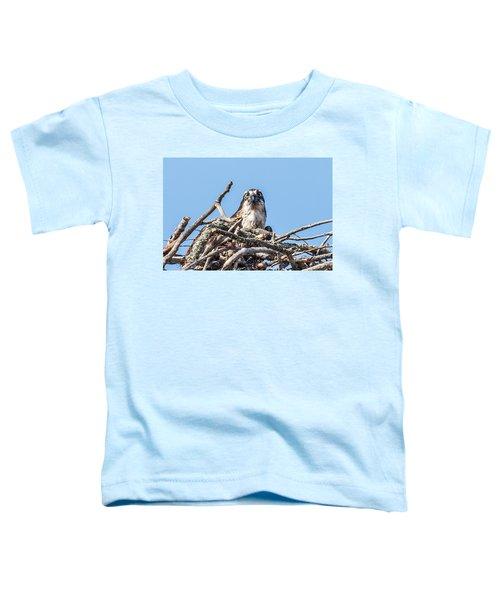 Osprey Eyes Toddler T-Shirt by Paul Freidlund