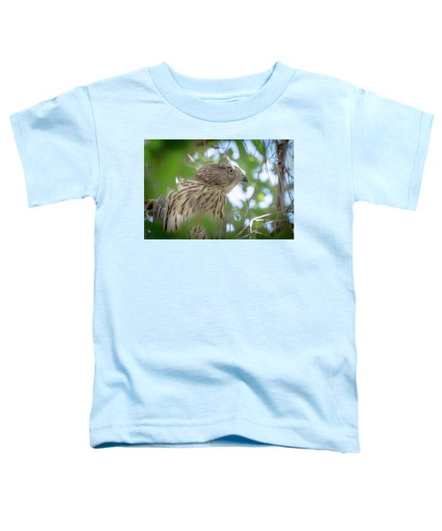 Red-shouldered Hawk Fledgling 1 Toddler T-Shirt