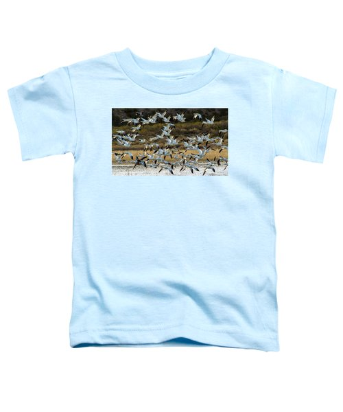 Snow Geese Flock In Flight Toddler T-Shirt