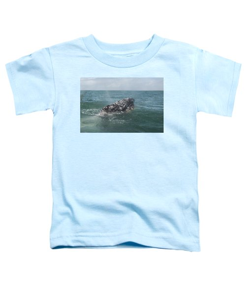 Gray Whale In Bahia Magdalena Toddler T-Shirt
