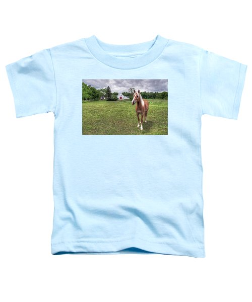 Horse In Pasture Toddler T-Shirt