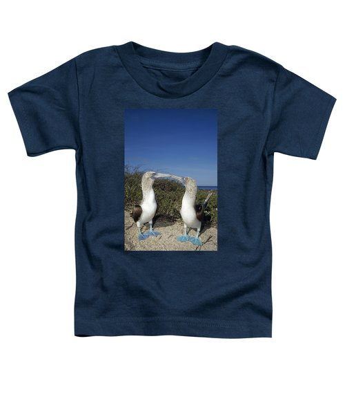 Blue-footed Boobies Courting Galapagos Toddler T-Shirt by Tui De Roy