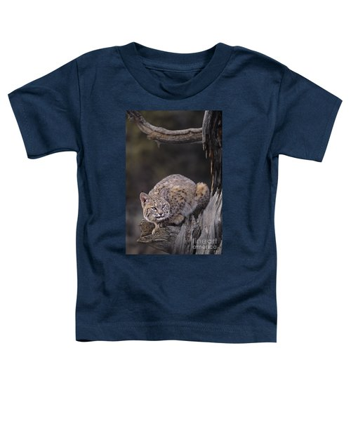 Crouching Bobcat Montana Wildlife Toddler T-Shirt