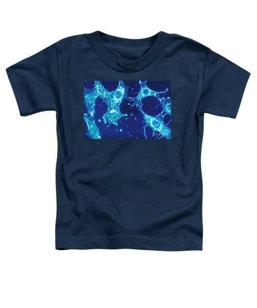 Connective Tissue Cells Toddler T-Shirt