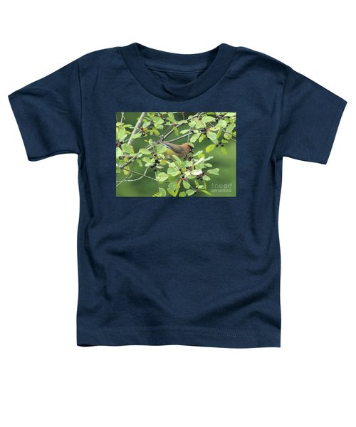 Cedar Waxwing Eating Berries Toddler T-Shirt by Maili Page