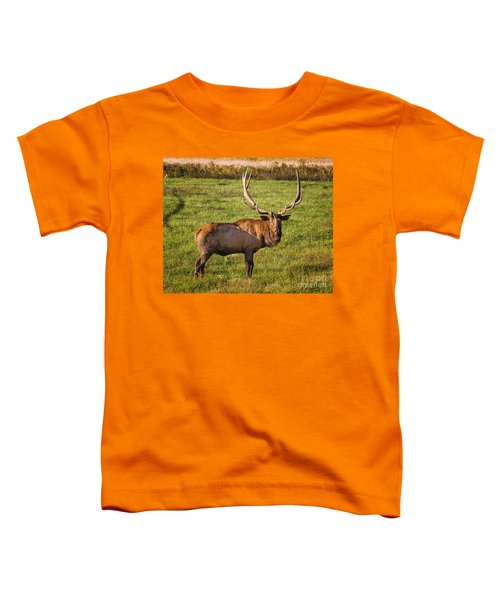 Bull Elk Toddler T-Shirt
