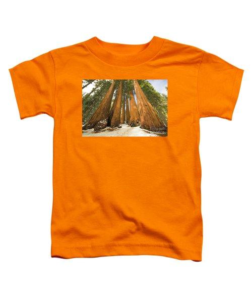 Giant Sequoias Sequoia N P Toddler T-Shirt