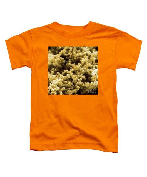 Sem Of Escherichia Coli Toddler T-Shirt