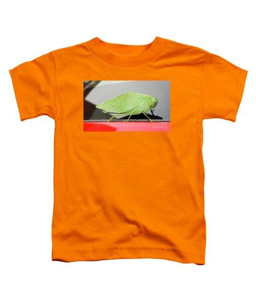 Katydids- Bush Crickets Toddler T-Shirt