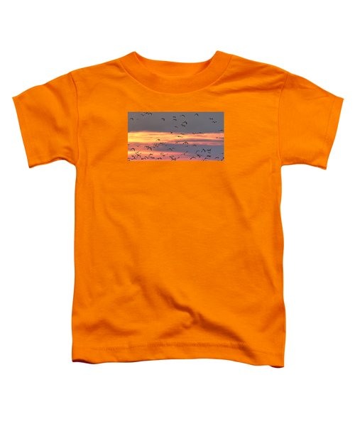Lapwings At Sunset Toddler T-Shirt by Jeff Townsend