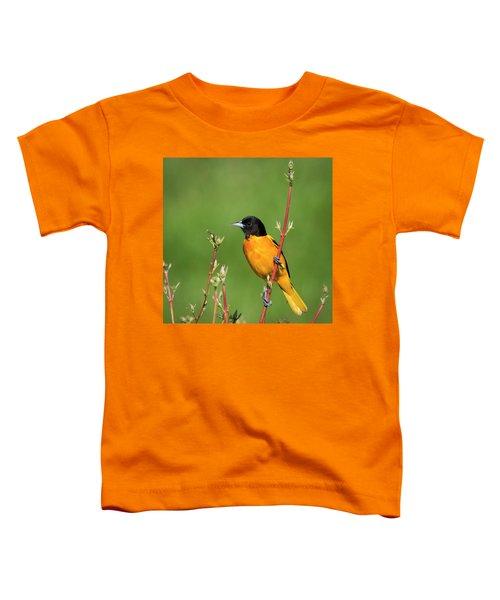 Male Baltimore Oriole Posing Toddler T-Shirt