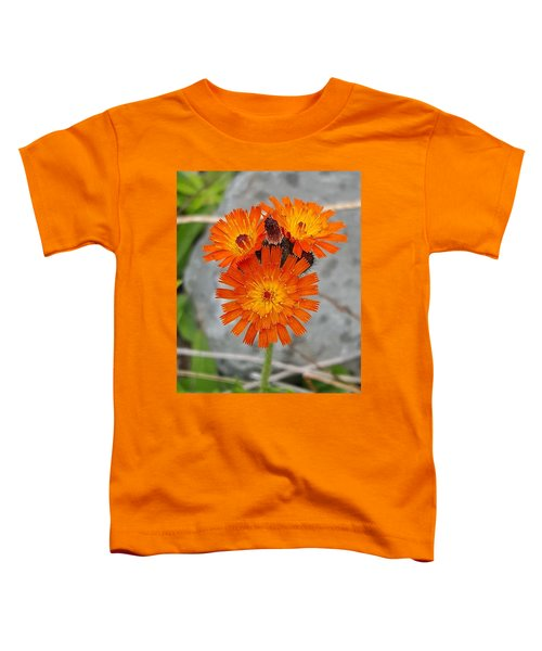 Orange Hawkweed Toddler T-Shirt