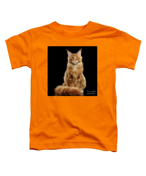 Portrait Of Ginger Maine Coon Cat Isolated On Black Background Toddler T-Shirt