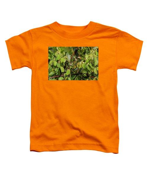 Klaas's Cuckoo Toddler T-Shirt