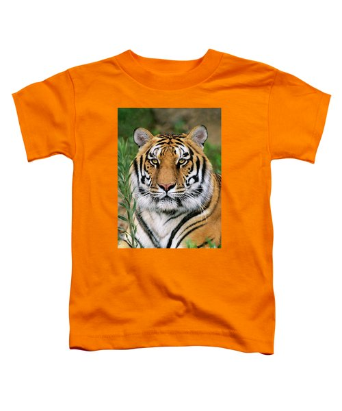 Siberian Tiger Staring Endangered Species Wildlife Rescue Toddler T-Shirt