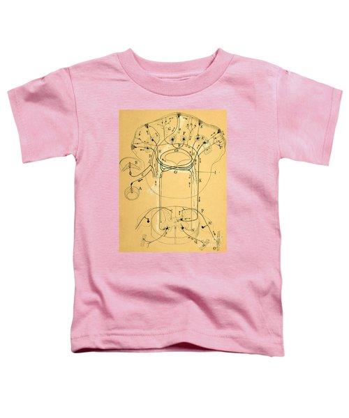 Brain Vestibular Sensor Connections By Cajal 1899 Toddler T-Shirt