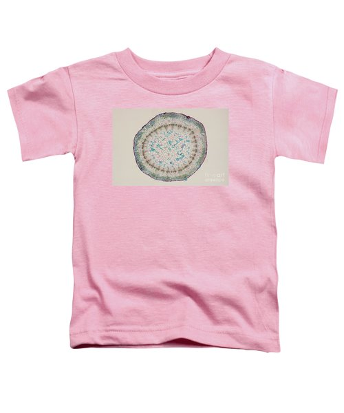 Grape Vine Tendril In Section Toddler T-Shirt