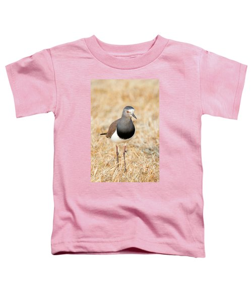 African Wattled Lapwing Vanellus Toddler T-Shirt by Panoramic Images