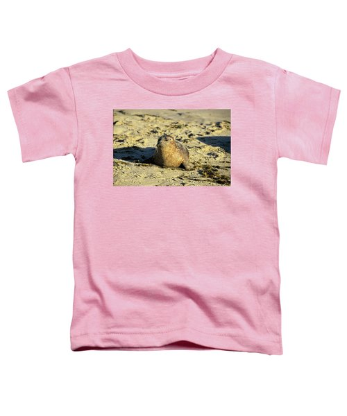 Baby Seal In Sand Toddler T-Shirt