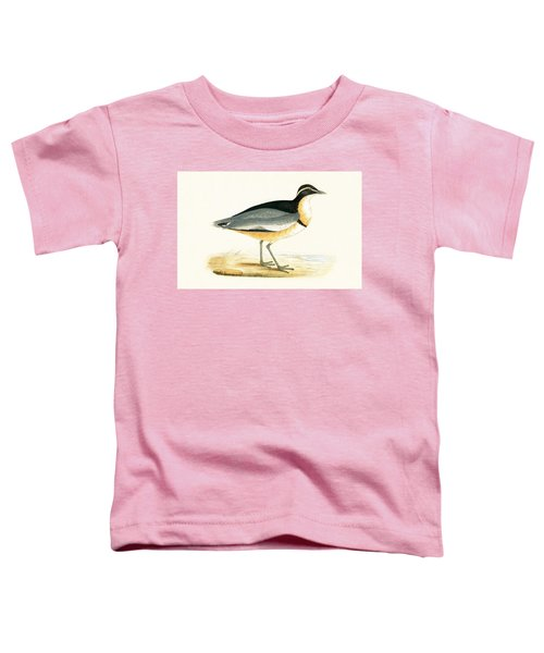 Black Headed Plover Toddler T-Shirt by English School