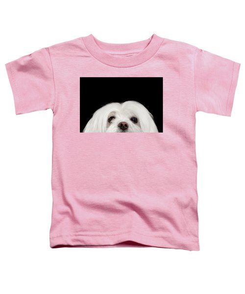Closeup Nosey White Maltese Dog Looking In Camera Isolated On Black Background Toddler T-Shirt