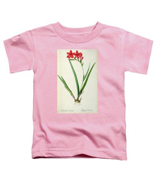 Gladiolus Cardinalis Toddler T-Shirt