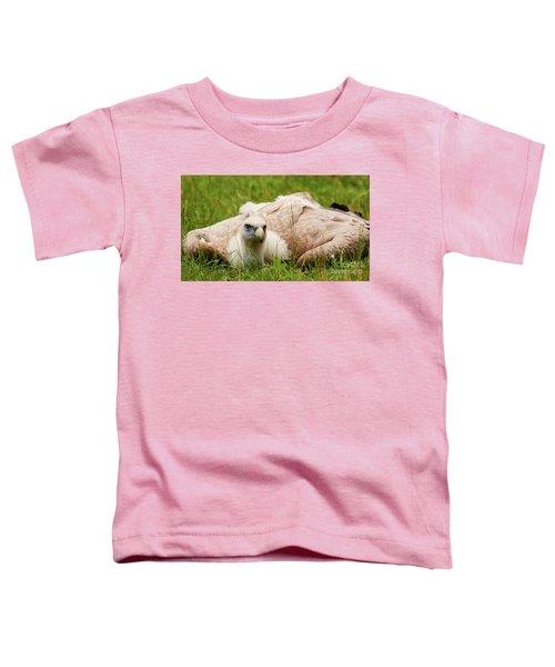 Griffon Vulture Toddler T-Shirt