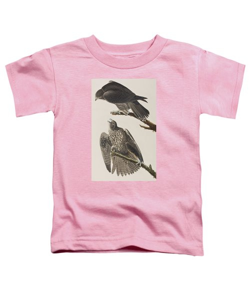 Labrador Falcon Toddler T-Shirt by John James Audubon