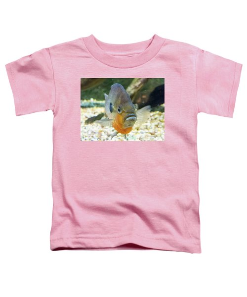 Piranha Behind Glass Toddler T-Shirt