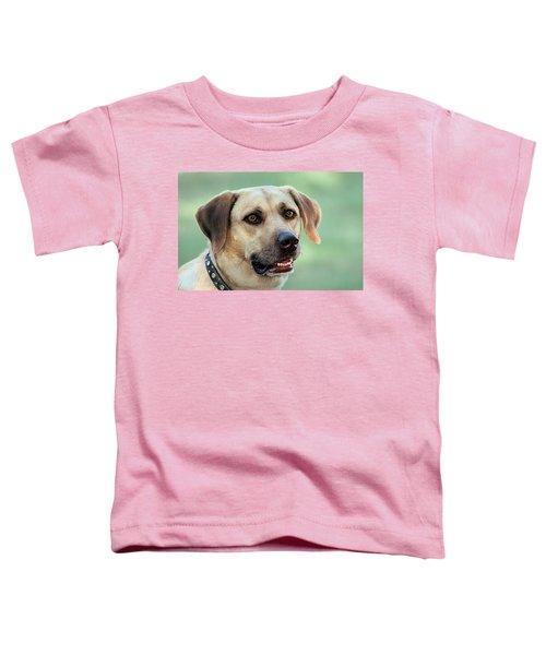 Portrait Of A Yellow Labrador Retriever Toddler T-Shirt